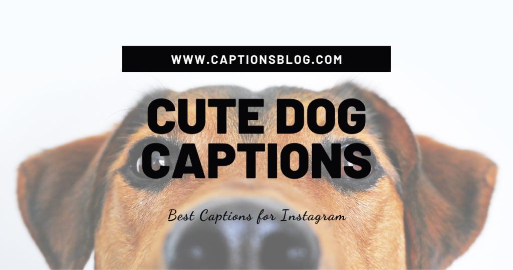 Cute Dog Captions
