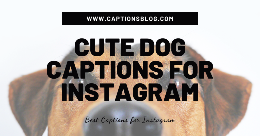 Cute Dog Captions For Instagram