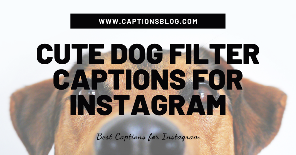 Cute Dog Filter Captions For Instagram