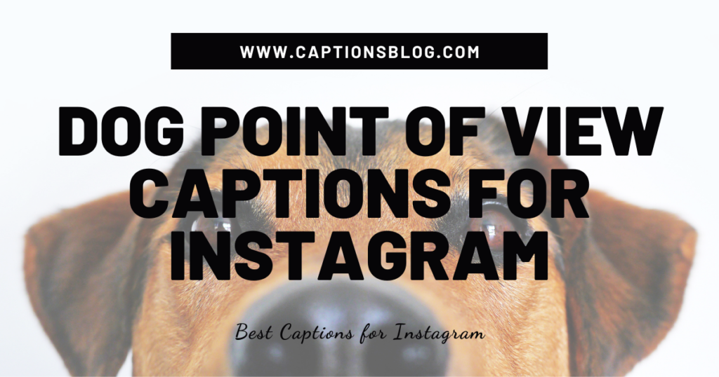 Dog Point of View Captions For Instagram