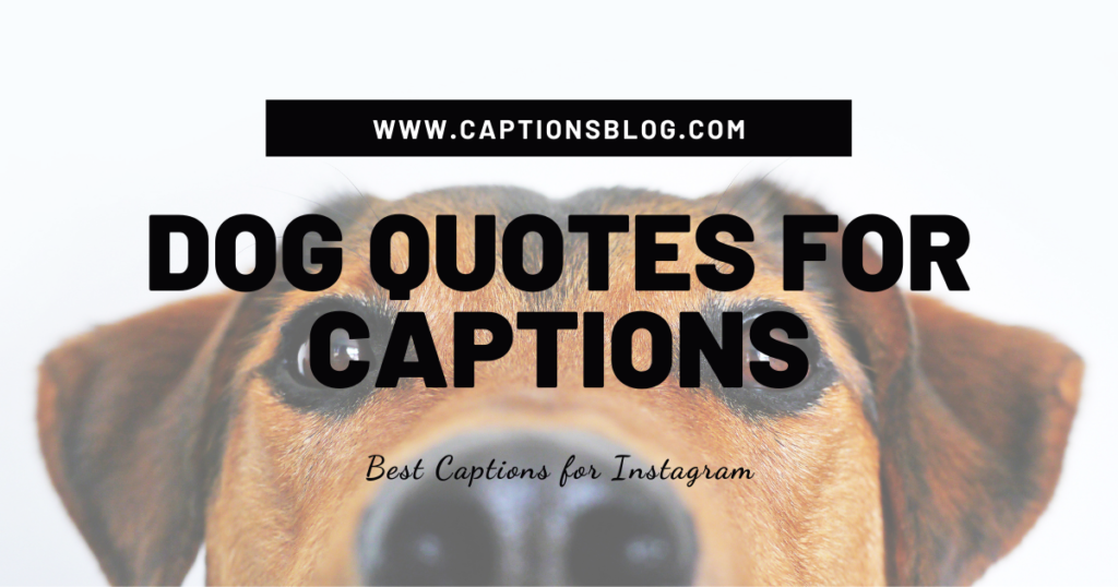Dog Quotes for Captions