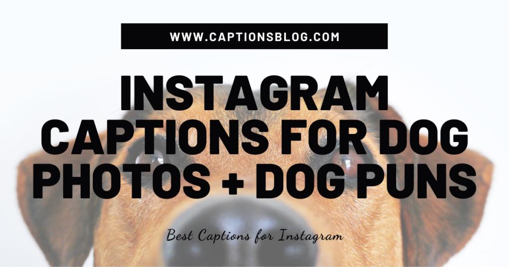 Instagram Captions for Dog Photos + Dog Puns