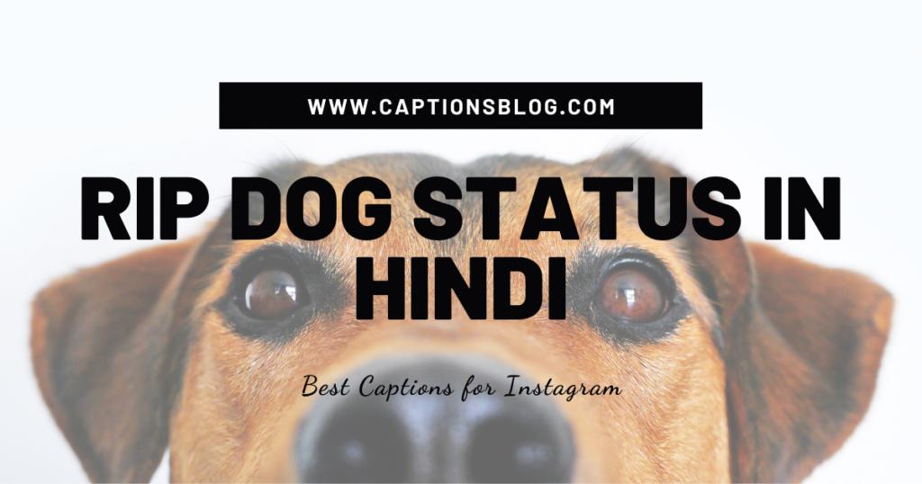 RIP Dog Status in Hindi