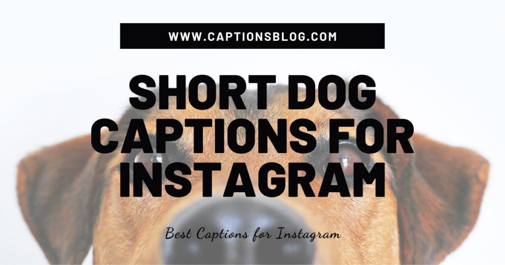 Short Dog Captions For Instagram