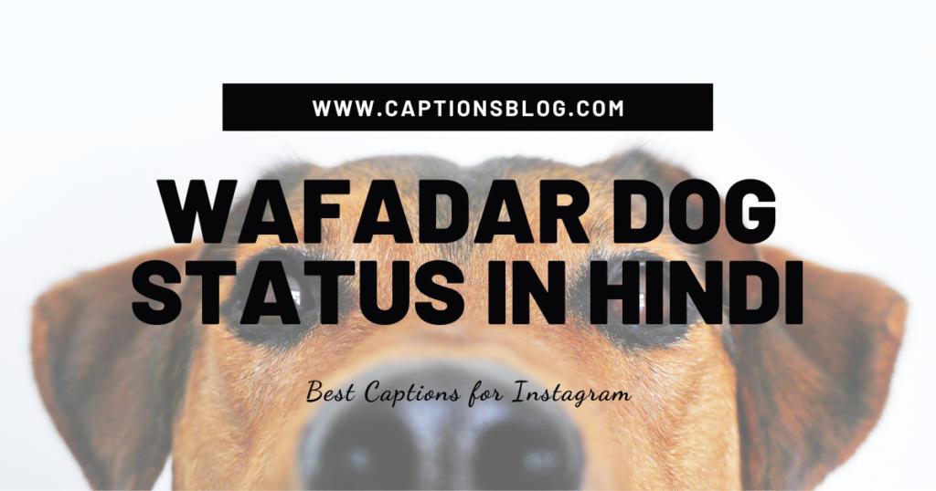 Wafadar Dog Status in Hindi